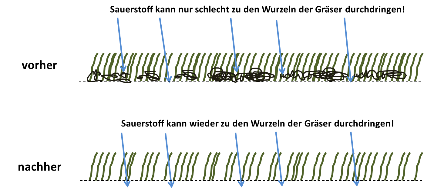Top Rasen vertikutieren richtig gemacht - Schritt für Schritt erklärt! XP35